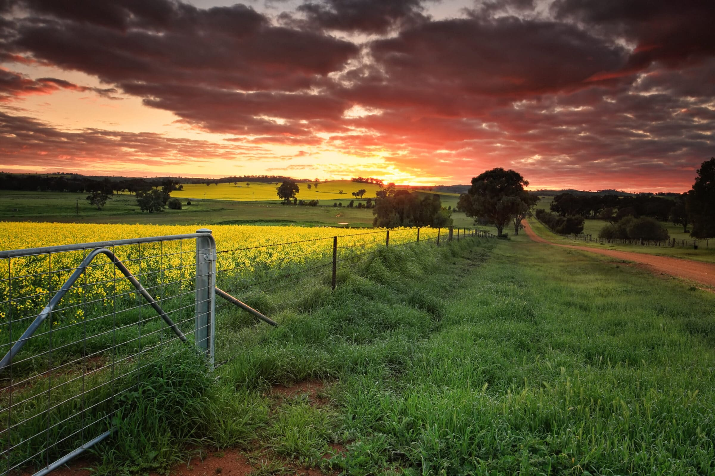Sunrise on the farm in country NSW Red skies